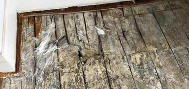 wet and dry rot treatment Manchester