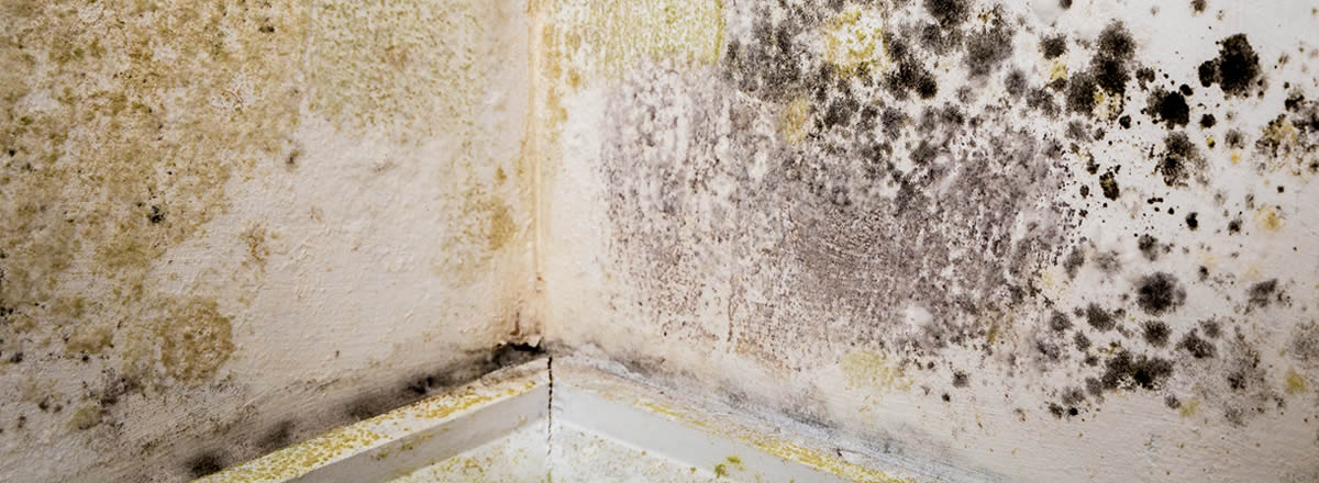 damp proofing Tyldesley